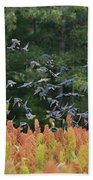 Cowbirds In Flight Over Milo Fields In Shiloh National Military Park Beach Towel