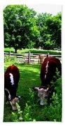 Cows Grazing Beach Towel