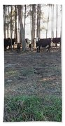 Cows In The Woods Beach Towel