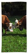 Cows Nuzzling Beach Towel
