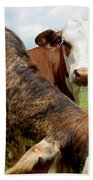 Cows8938 Beach Towel