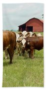 Cows8939 Beach Towel