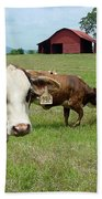 Cows8986 Beach Towel