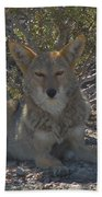 Coyote 2 Beach Towel