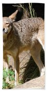 Coyote Grin Beach Towel