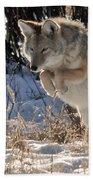 Coyote In Mid Jump Beach Towel