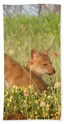 Coyote Pups Beach Towel