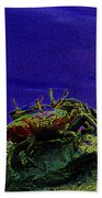 Crab Cakez 5 Beach Towel