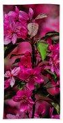 Crabapple Tree Blossoms Beach Towel