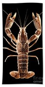 Crawfish In The Dark - Sepia Beach Towel