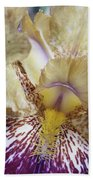 Cream And Purple Iris Beach Towel