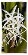 Crinum Spiderlily Flower Beach Towel