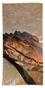 Croc Beach Sheet