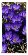 Crocus Beach Towel