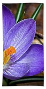 Crocus Emerging Beach Towel