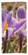 Crocuses 2 Beach Towel