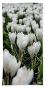 Crocuses 5 Beach Towel