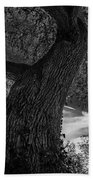 Crooked Oak Black And White Beach Towel