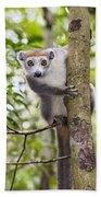 Crowned Lemur Madagascar Beach Towel