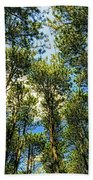 Crystal Lake Il Pine Grove And Sky Beach Towel
