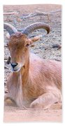 Cuckold Beach Towel
