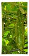 Cucumber On Tree In The Garden 1 Beach Towel