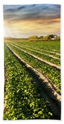 Cultivated Land Beach Towel by Carlos Caetano