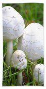 Cumberland Toadstools Beach Sheet