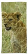Curious Cub Beach Towel