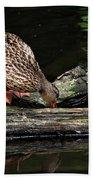 Curious Duck Beach Sheet