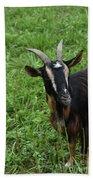 Curious Goat With Very Long Shaggy Fur Beach Towel