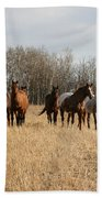 Curious Horses Beach Towel