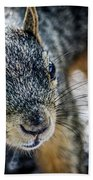 Curious Squirrel Beach Towel