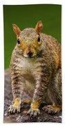 Curious Squirrel Beach Towel