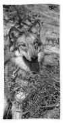 Curious Wolf Pup Beach Towel