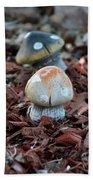 Cluster Of Toadstools  In Fairy Garden Beach Sheet