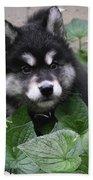 Cute Alusky Puppy In A Bunch Of Plant Foliage Beach Towel