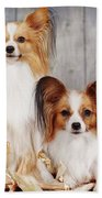 cute couple dogs breed papillon by Iuliia Malivanchuk  Beach Towel