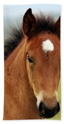 Cute Foal Beach Towel