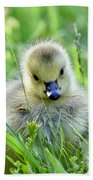 Cute Goose Chick Beach Towel