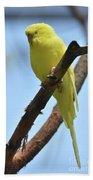 Cute Little Parakeet Resting On A Branch Beach Towel