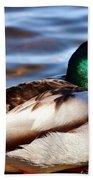 Cute Male Mallard Duck Beach Towel
