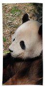 Cute Panda Bear Eating A Green Shoot Of Bamboo Beach Towel
