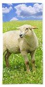 Cute Young Sheep Beach Towel by Elena Elisseeva