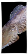 Cuttlefish At Night Beach Sheet