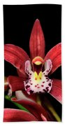 Cymbidium Orchid 001 Beach Towel