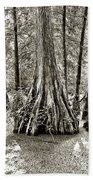 Cypress Evening Beach Towel