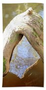 Cypress Knees Beach Towel