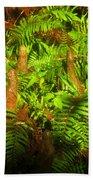 Cypress Knees In Ferns Beach Towel