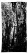 Cypress Tree Beach Sheet